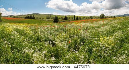 Panoramic view on a wildflower field in the rolling hills of Tuscany near Pienza Italy
