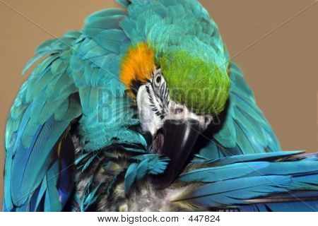 Max The Parrot 7