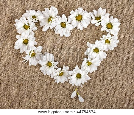 Flowers daisy shape heart on a canvas background , valentines day card concept