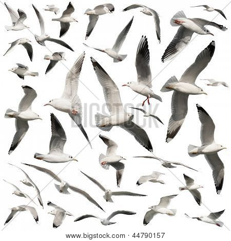 birds set isolated on white