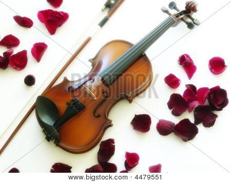 Violin With Rose Petals