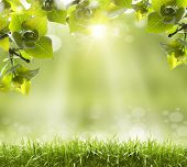 image of blinking  - Spring or summer season abstract nature background - JPG