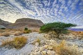stock photo of masada  - Masada in the desert of Israel - JPG