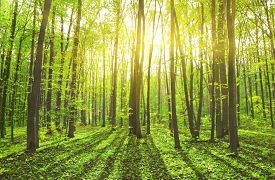 stock photo of incredible  - Beautiful nature at morning in the misty spring forest with sun rays - JPG