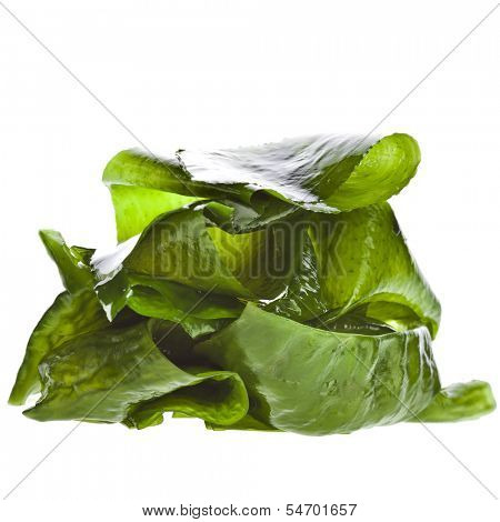seaweed kelp ( laminaria ) wet heap pile close up isolated on white background