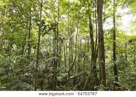 Interior of tropical rainforest