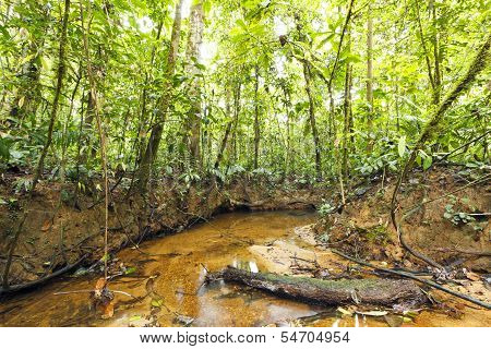 Stream winding through lowland tropical rainforest