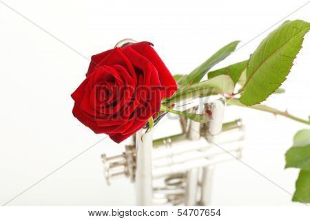 Red Rose And Old Trumpet