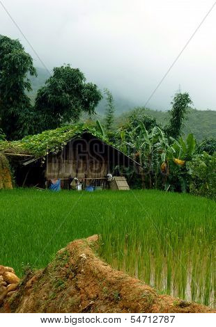 Peaceful Rice Farm In Mountains