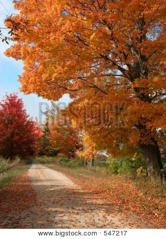 Fall Rural Road
