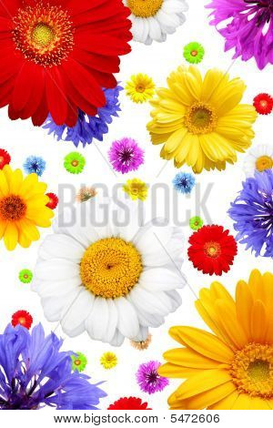 Summer Flowers Isolated On White Background