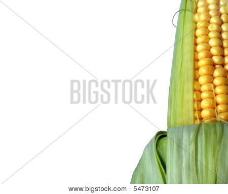 Corn Isolated On White  Backgound