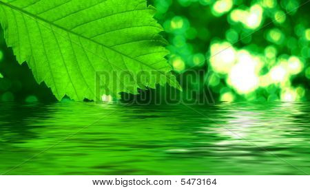 Green Leave Reflecting In The Water