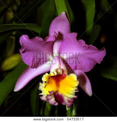 Colorful Orchid Species