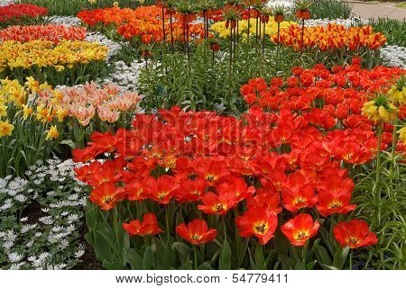 Ogres Full Of Colorful Flowers, Tulips And Hyacinths. Horizontal.