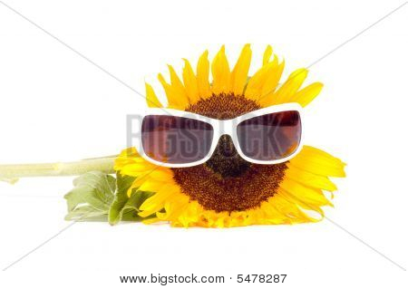 Sunflower Wearing Sunglasses