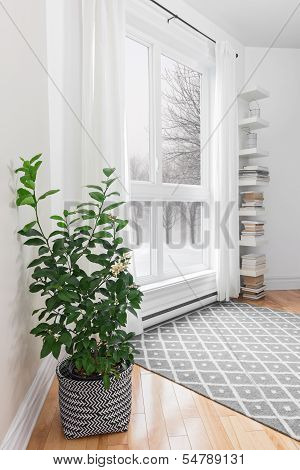 Lemon Tree In A Room With Peaceful View