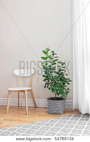 Lemon Tree In A Bright Room