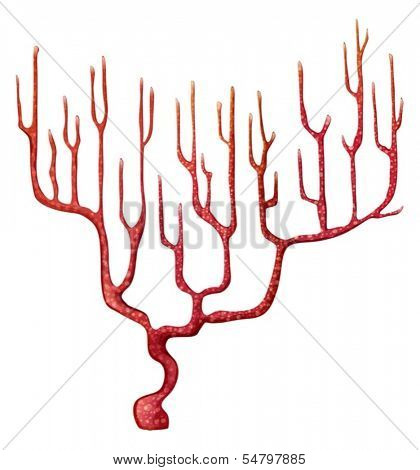 Illustration of a red coral on a white background