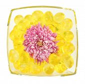 Beautiful flower in vase with hydrogel isolated on white poster