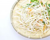 foto of soybean sprouts  - close up fresh Bean Sprouts on White Background - JPG