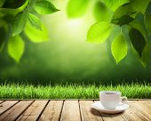 foto of sunny season  - cup coffee and sunny trees background - JPG