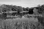 picture of cattail  - a barn in disrepair sitting on the edge of a pond with trees - JPG