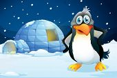 stock photo of igloo  - Illustration of a penguin standing near the igloo - JPG