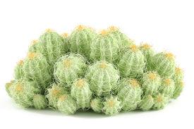image of peyote  - Plant bush isolated - JPG