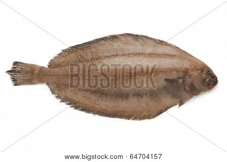 Fresh raw megrim fish on white background