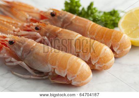 Tails of fresh raw langoustines
