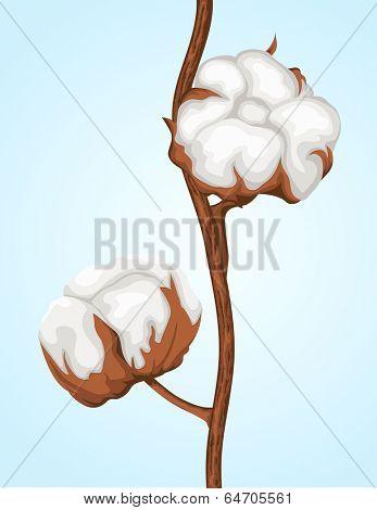 Cotton buds branch