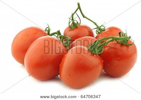 fresh and colorful italian plum tomatoes on a white background