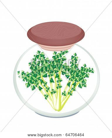 Jar Of Pickled Garland Chrysanthemum In Malt Vinegar