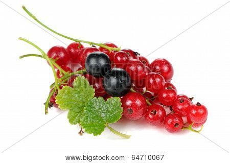 Red And Blackcurrants With Green Leaves Isolated On White Background