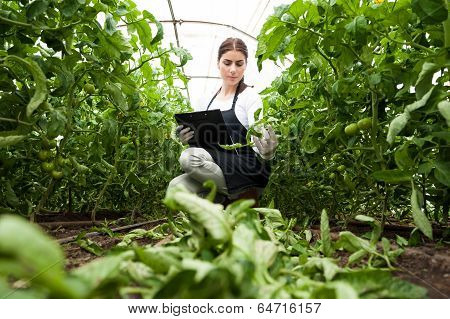 Young woman agriculture inspector checking plants