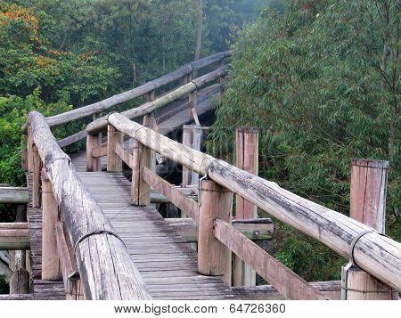 Amazon Trail Ecotourism Forest