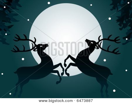 Reindeers at night