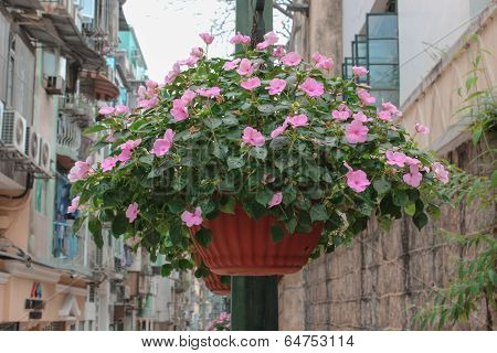 Basket Of Light-pink Ipomoea Flowers