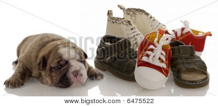 Bulldog Puppy Beside Pile Of Shoes