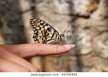 Butterfly Sitting On Finger