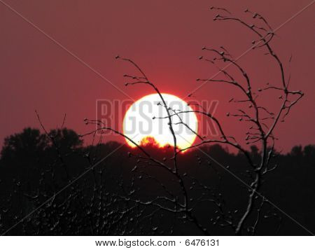 Sunset With Trees In Foreground