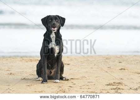 Cross Breed Dog Playing At The Beach