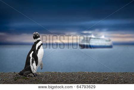 Penguin And Cruise Ship In Patagonia. High definition image.