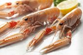 image of norway lobster  - Claws of fresh raw langoustines - JPG