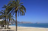 foto of costa blanca  - Palms and sandy beach on the Mediterranean coast at Altea Costa Blanca Spain - JPG