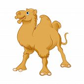 image of hump  - Vector image of an yellow Cartoon Camel - JPG