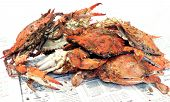 image of blue crab  - cooked blue crabs - JPG