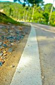 image of tree lined street  - close up white line on the street road at nature background - JPG