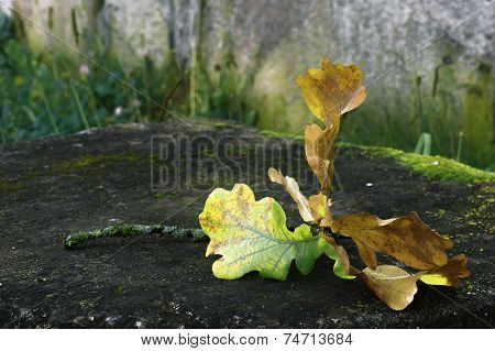 Autumn leaf fallen tree